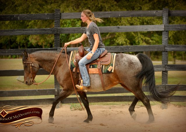 011-Harley-Blue-Roan-AQHA-Gelding-For-Sale