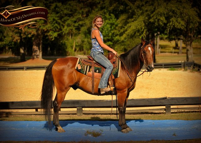 011-Indie-Bay-Quarter-Horse-Gelding-For-Sale