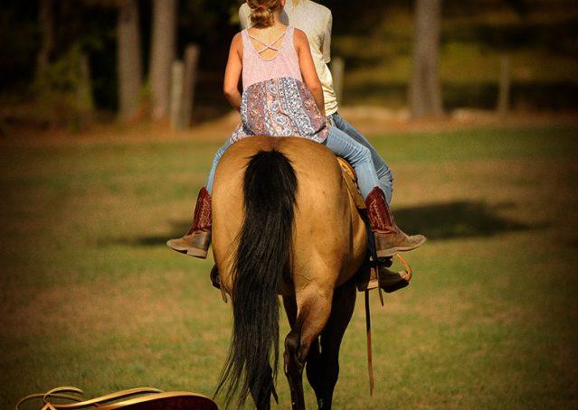 011-Murphy-Buckskin-Quarter-Horse-Gelding-For-Sale