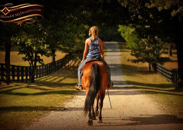 012-Indie-Bay-Quarter-Horse-Gelding-For-Sale