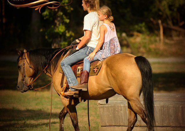 012-Murphy-Buckskin-Quarter-Horse-Gelding-For-Sale