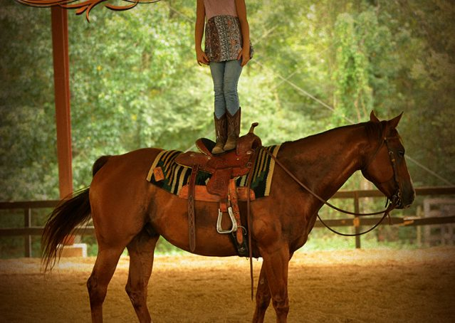 013-Cruz-Sorrel-AQHA-Gelding-For-Sale