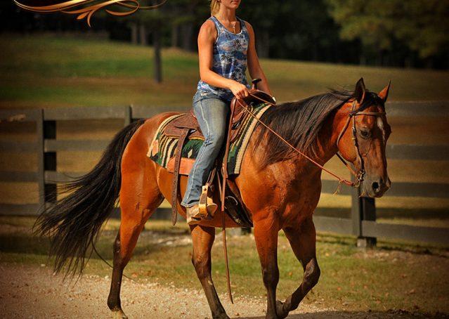 013-Indie-Bay-Quarter-Horse-Gelding-For-Sale