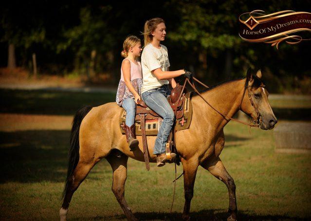 013-Murphy-Buckskin-Quarter-Horse-Gelding-For-Sale