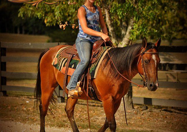 014-Indie-Bay-Quarter-Horse-Gelding-For-Sale