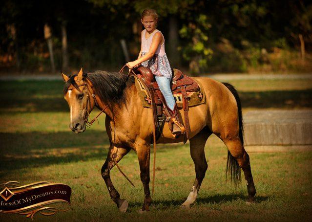 014-Murphy-Buckskin-Quarter-Horse-Gelding-For-Sale