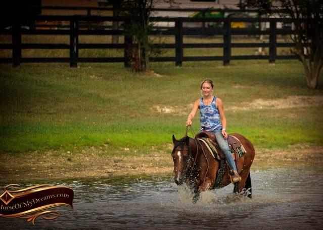 015-Indie-Bay-Quarter-Horse-Gelding-For-Sale