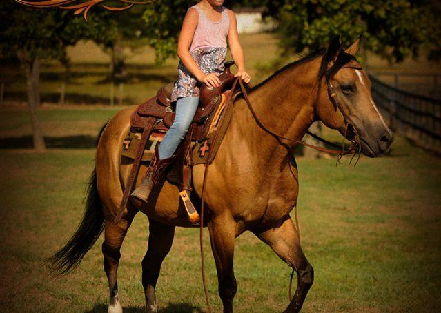 015-Murphy-Buckskin-Quarter-Horse-Gelding-For-Sale