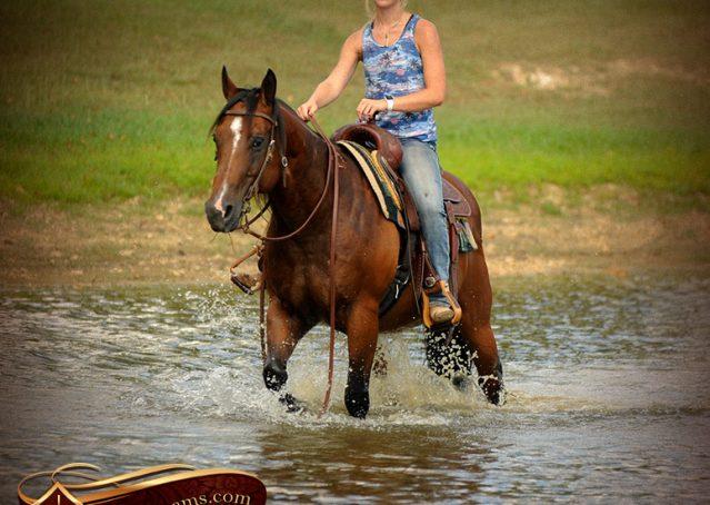 016-Indie-Bay-Quarter-Horse-Gelding-For-Sale