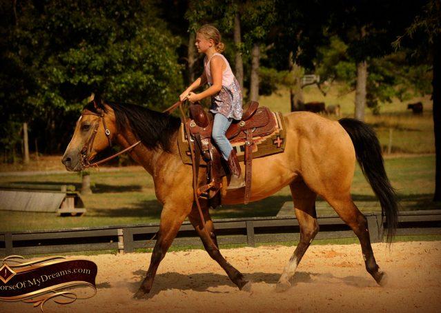 016-Murphy-Buckskin-Quarter-Horse-Gelding-For-Sale