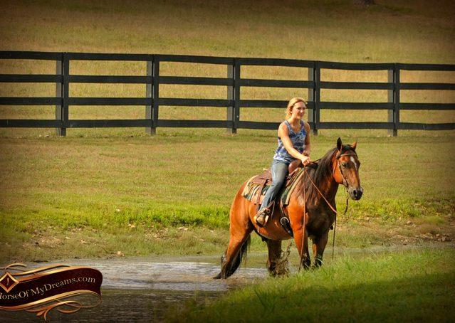 017-Indie-Bay-Quarter-Horse-Gelding-For-Sale