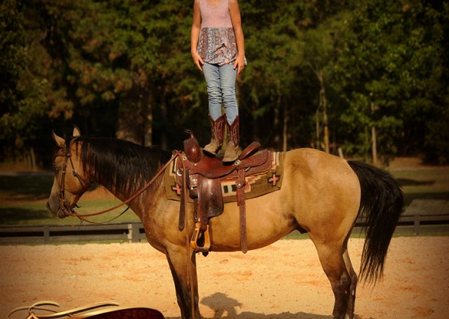 017-Murphy-Buckskin-Quarter-Horse-Gelding-For-Sale