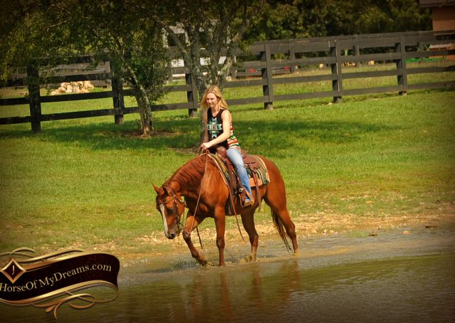 018-Cruz-Sorrel-AQHA-Gelding-For-Sale