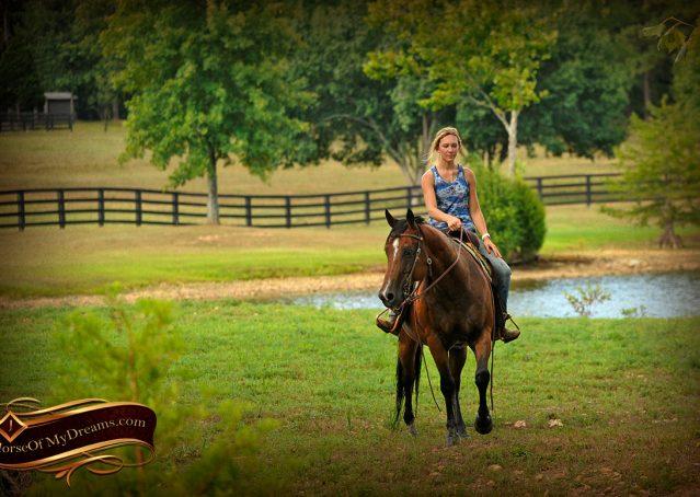 018-Indie-Bay-Quarter-Horse-Gelding-For-Sale