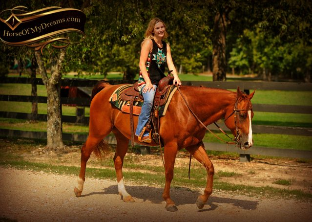 019-Cruz-Sorrel-AQHA-Gelding-For-Sale