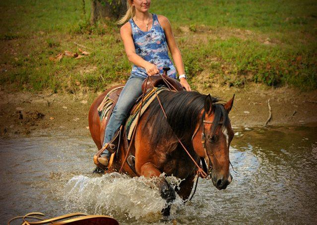 019-Indie-Bay-Quarter-Horse-Gelding-For-Sale