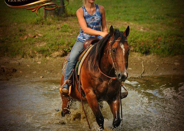 020-Indie-Bay-Quarter-Horse-Gelding-For-Sale
