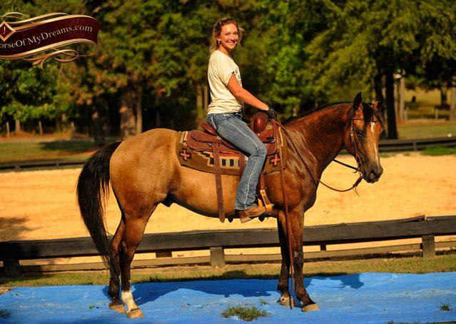 020-Murphy-Buckskin-Quarter-Horse-Gelding-For-Sale