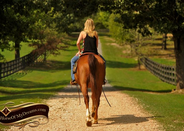 021-Cruz-Sorrel-AQHA-Gelding-For-Sale