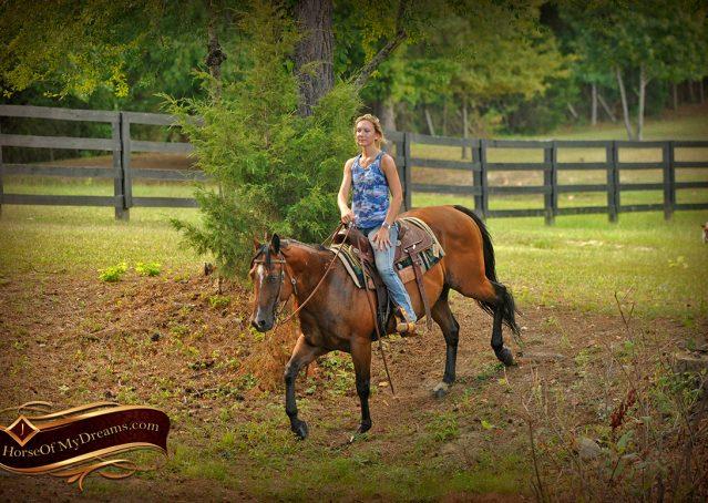 021-Indie-Bay-Quarter-Horse-Gelding-For-Sale
