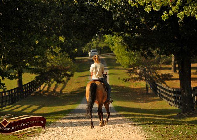 021-Murphy-Buckskin-Quarter-Horse-Gelding-For-Sale
