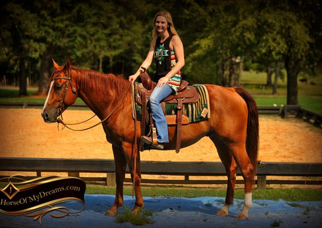022-Cruz-Sorrel-AQHA-Gelding-For-Sale