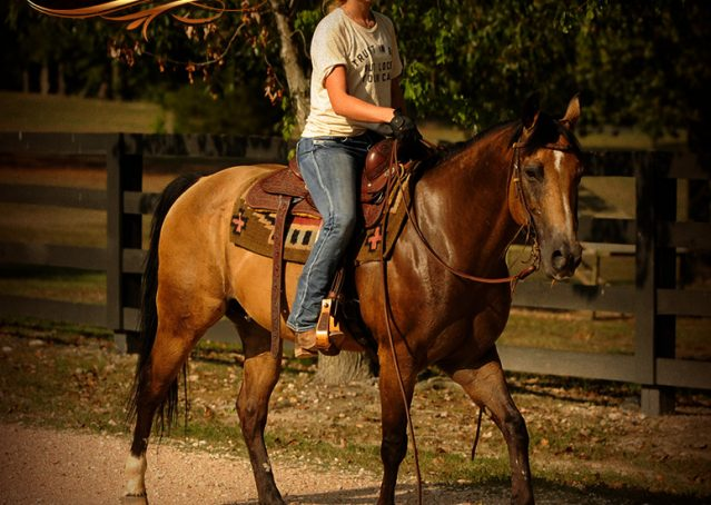 022-Murphy-Buckskin-Quarter-Horse-Gelding-For-Sale