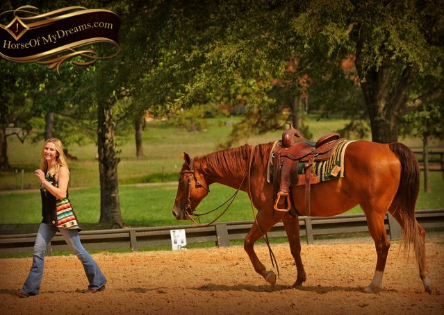024-Cruz-Sorrel-AQHA-Gelding-For-Sale