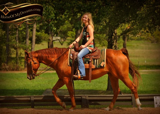 027-Cruz-Sorrel-AQHA-Gelding-For-Sale