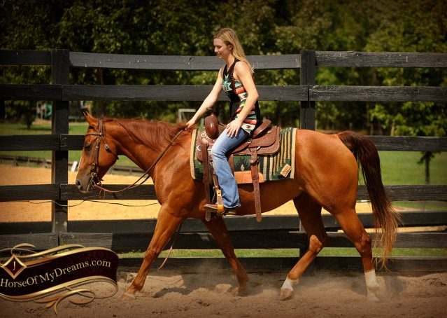 029-Cruz-Sorrel-AQHA-Gelding-For-Sale