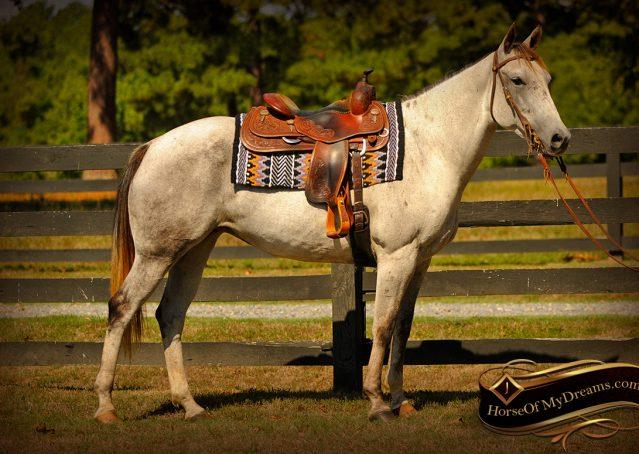 001-Gracie-Gray-Quarter-Horse_Mare-For-Sale