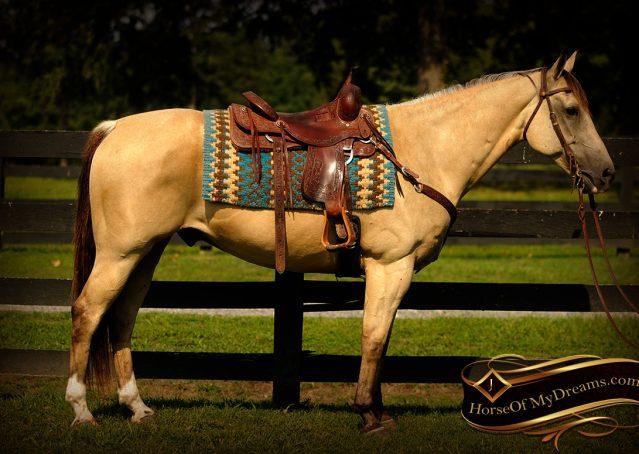 001-Gunsmoke-Buckskin-Quarter-Horse-Gelding