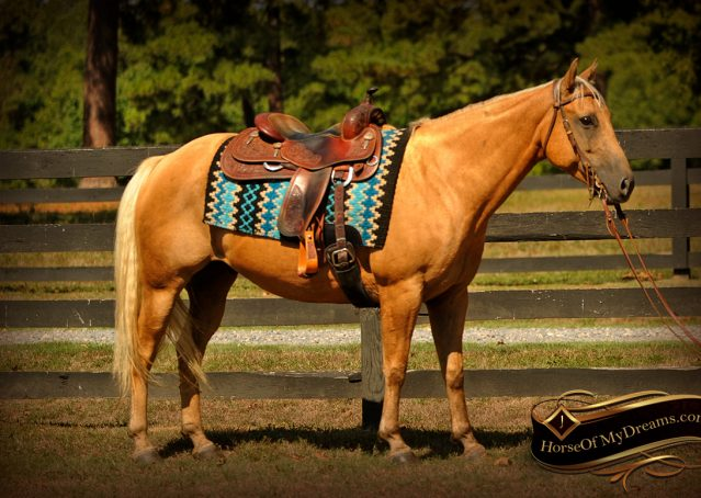 001-Oakley-Palomino-Quarter-Horse-Gelding-For-Sale