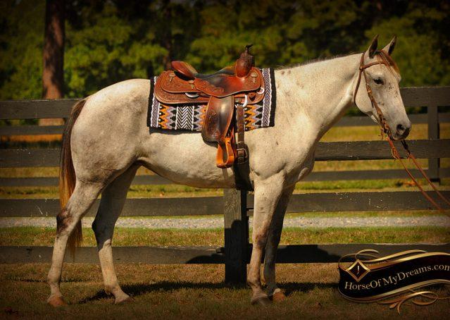 002-Gracie-Gray-Quarter-Horse_Mare-For-Sale