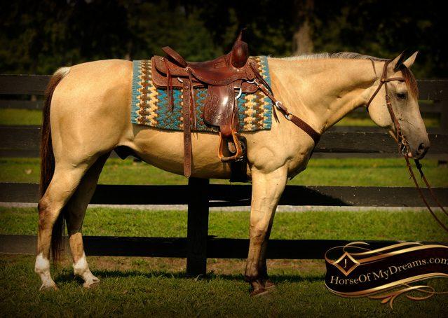 002-Gunsmoke-Buckskin-Quarter-Horse-Gelding