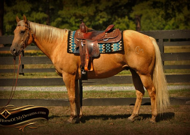 002-Oakley-Palomino-Quarter-Horse-Gelding-For-Sale