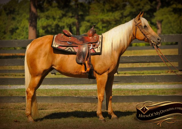 002-Salena-AQHA-Palomino-Mare-For-Sale