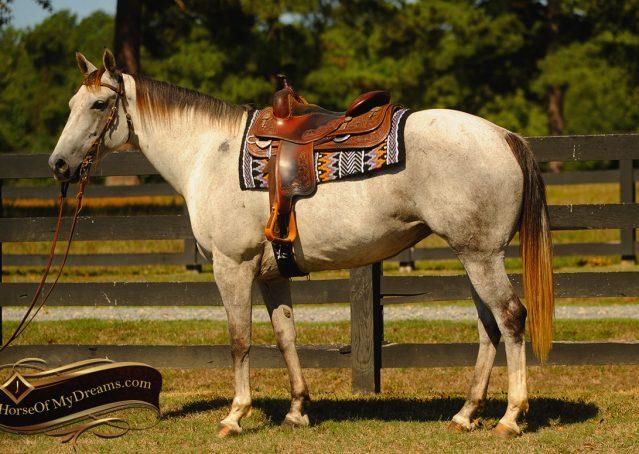 003-Gracie-Gray-Quarter-Horse_Mare-For-Sale