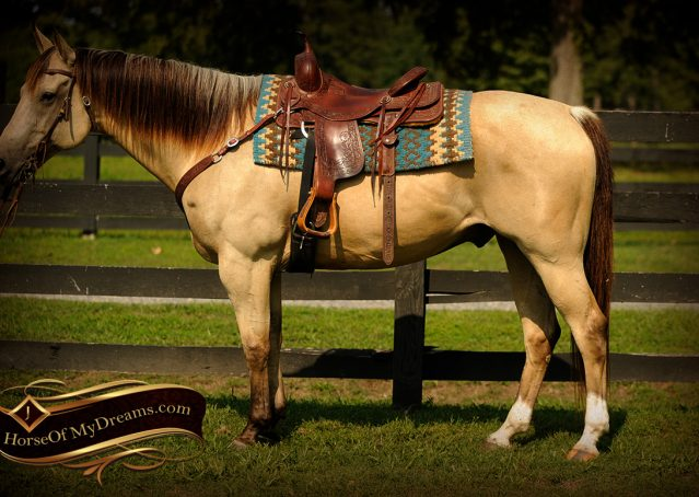 003-Gunsmoke-Buckskin-Quarter-Horse-Gelding