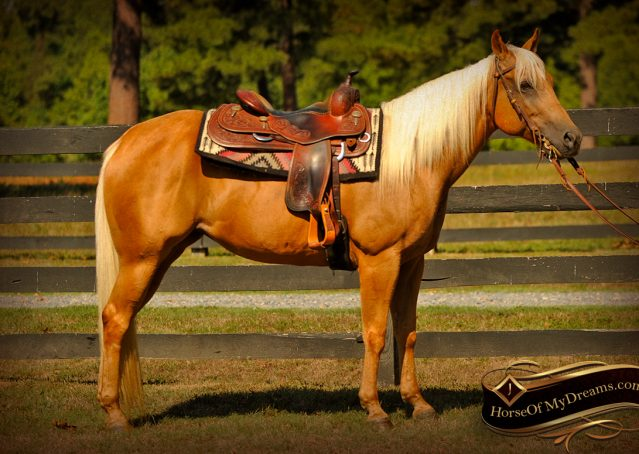 003-Salena-AQHA-Palomino-Mare-For-Sale