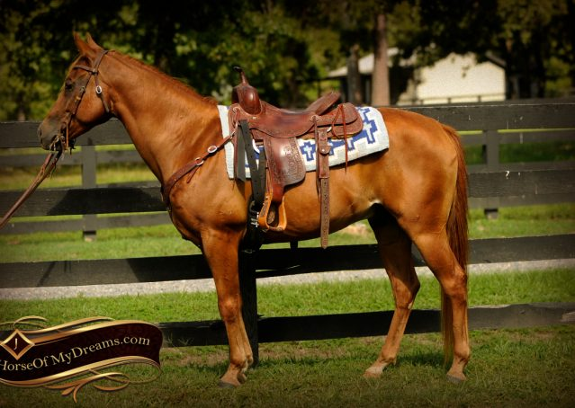 004-Freckles-Red-Dun-AQHA-Gelding-For-Sale