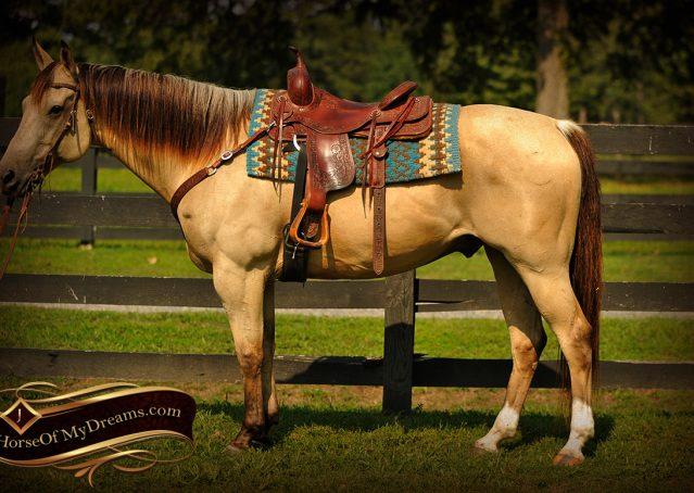 004-Gunsmoke-Buckskin-Quarter-Horse-Gelding