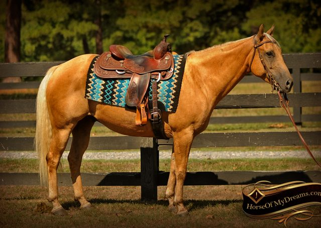 004-Oakley-Palomino-Quarter-Horse-Gelding-For-Sale