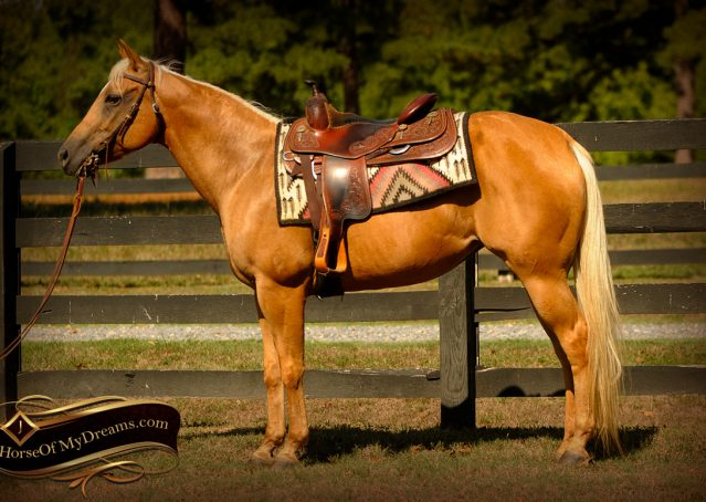 004-Salena-AQHA-Palomino-Mare-For-Sale