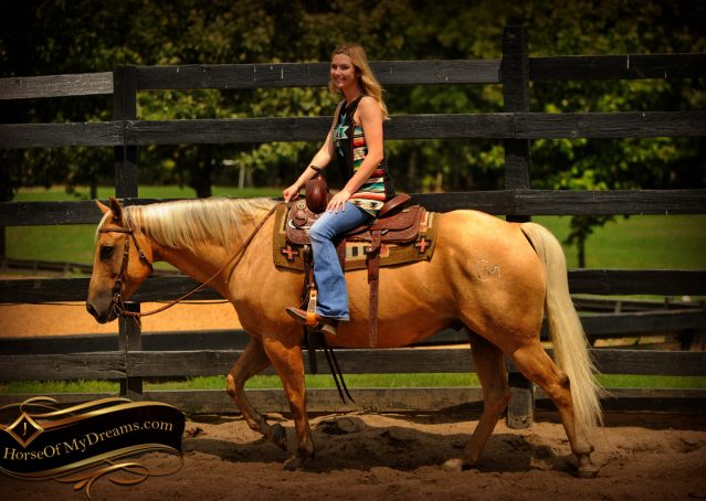 006-Oakley-Palomino-Quarter-Horse-Gelding-For-Sale