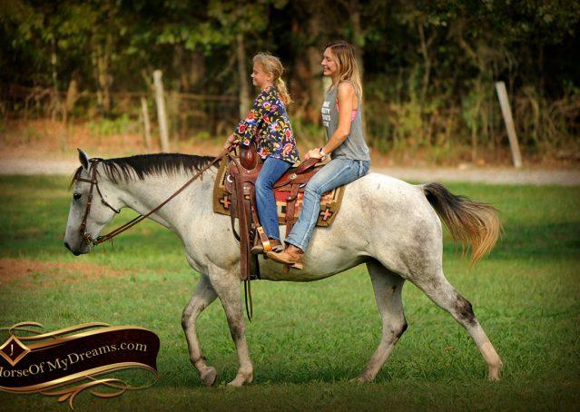 008-Gracie-Gray-Quarter-Horse_Mare-For-Sale