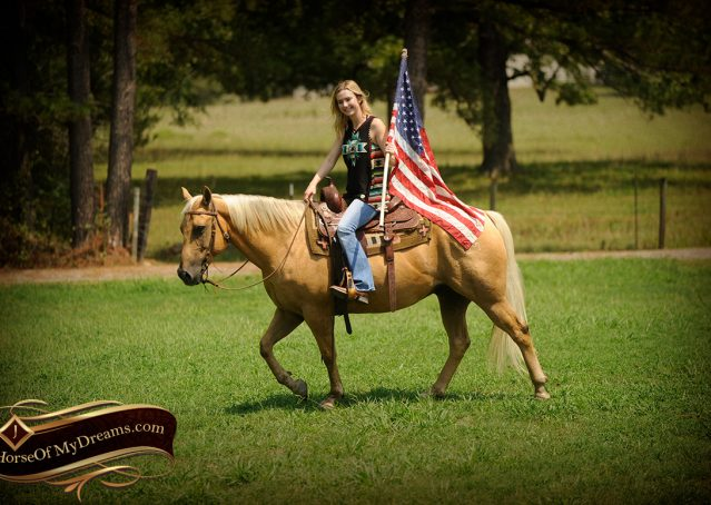 008-Oakley-Palomino-Quarter-Horse-Gelding-For-Sale