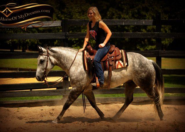 008-Sterling-Gray-Quarter-Horse-Gelding