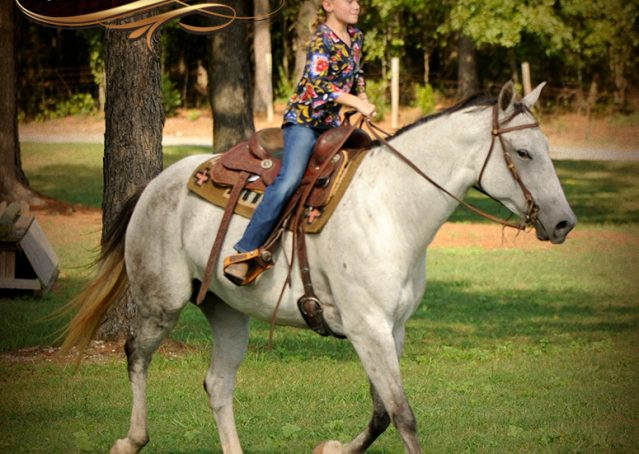 009-Gracie-Gray-Quarter-Horse_Mare-For-Sale