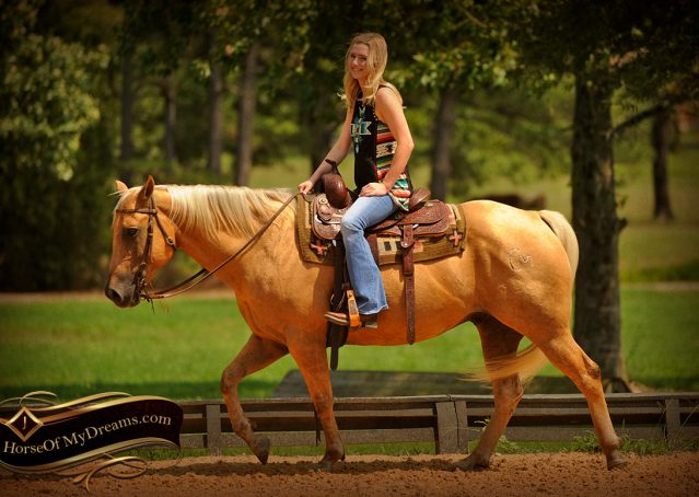 010-Oakley-Palomino-Quarter-Horse-Gelding-For-Sale